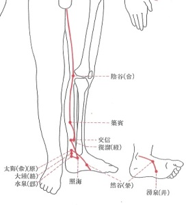 7足少陰腎経-下