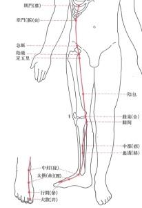 9足厥陰肝経-PWP