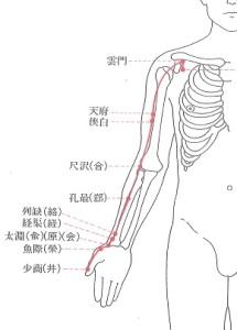4手太陰肺経-PWP